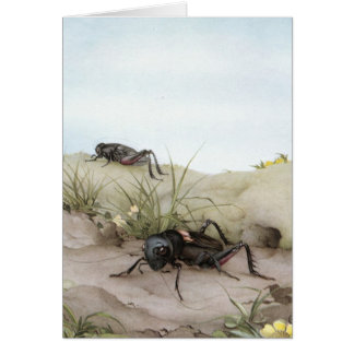 THE FIELD CRICKET GREETING CARD