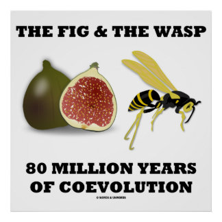 The Fig & The Wasp 80 Million Years Of Coevolution Poster
