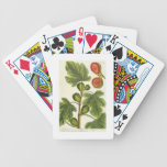 The Fig Tree, plate 125 from 'A Curious Herbal', p Bicycle Playing Cards
