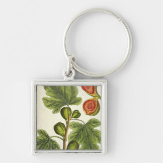 The Fig Tree, plate 125 from 'A Curious Herbal', p Key Chains