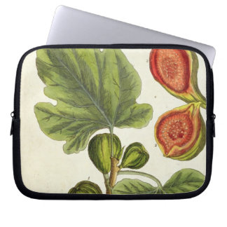 The Fig Tree, plate 125 from 'A Curious Herbal', p Laptop Sleeve