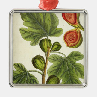 The Fig Tree, plate 125 from 'A Curious Herbal', p Metal Ornament
