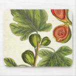 The Fig Tree, plate 125 from 'A Curious Herbal', p Mouse Pad