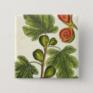 The Fig Tree, plate 125 from 'A Curious Herbal', p Pinback Button