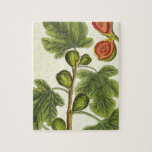 The Fig Tree, plate 125 from 'A Curious Herbal', p Puzzle