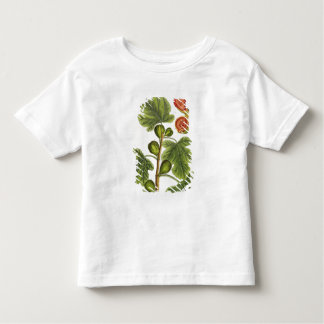 The Fig Tree, plate 125 from 'A Curious Herbal', p Tee Shirt