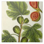 The Fig Tree, plate 125 from 'A Curious Herbal', p Tiles