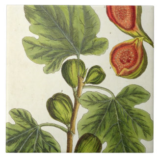 The Fig Tree, plate 125 from 'A Curious Herbal', p Large Square Tile