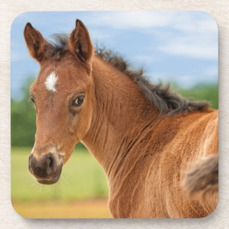 The Filly Beverage Coasters
