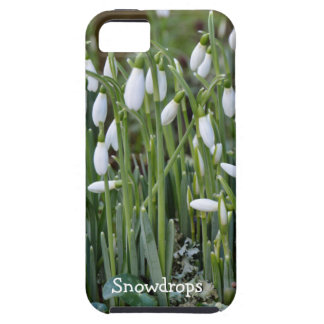 The First Snowdrops of Spring in Cornwall Case