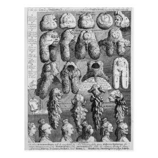 The Five Orders of Perriwigs, 1761 Postcard