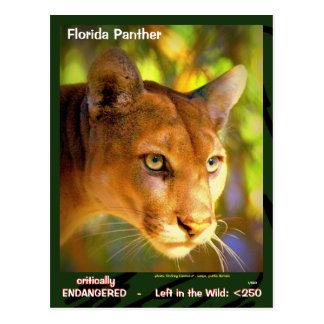 The Florida Panther, an endangered animal  -- Postcard