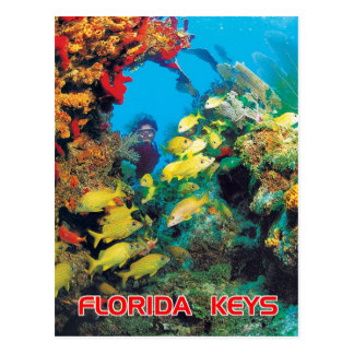 The Florida Reef in the Florida Keys Postcard