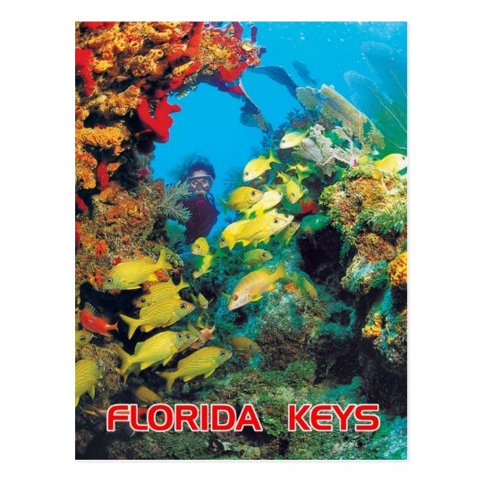 The Florida Reef in the Florida Keys Postcard