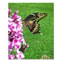The Fluttering Giant - 8x10 Photo Print