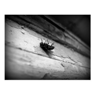 the fly postcard