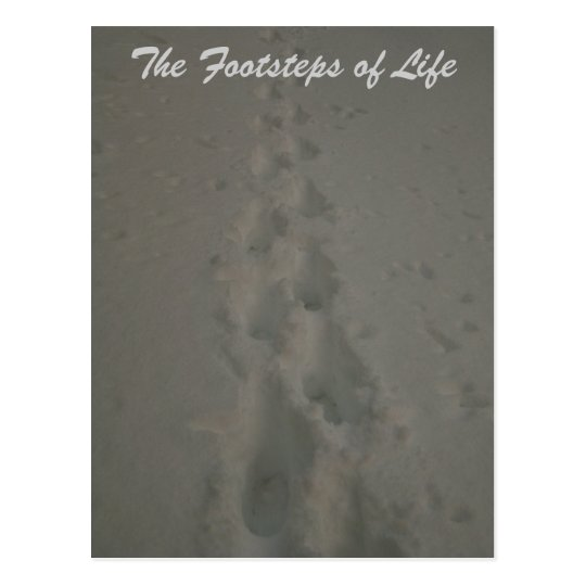 The Footsteps of Life Postcard