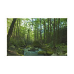 The Forest Escape Canvas Print