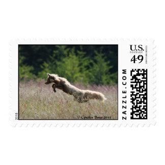 The Fox Hunts Stamp