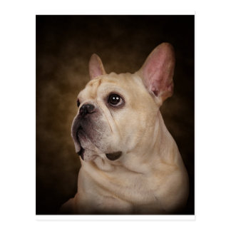 The Frenchie Postcard
