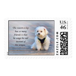 The Friendliness and Patience of a Faithful Dog Postage Stamps