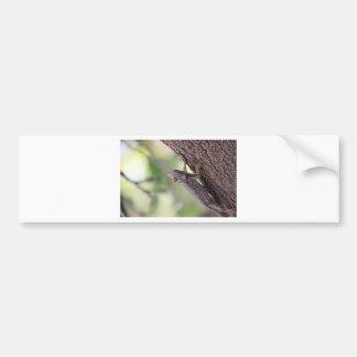 The Friendly Lizard Car Bumper Sticker