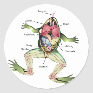 The Frog's Anatomy Graphic Classic Round Sticker