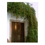 The front of a building in Taxco with a vine Postcard