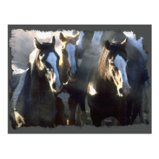 The Gathering of the Herd Postcard