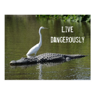 The gator and egret postcard