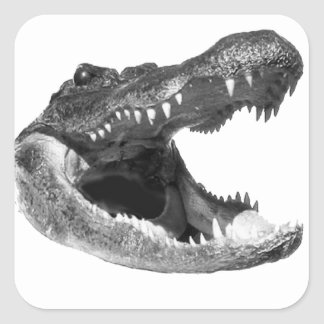THE GATOR ATTACKS SQUARE STICKER