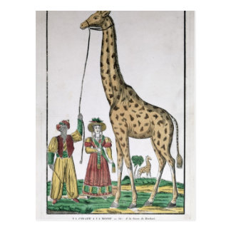 The Giraffe Presented to King from Pasha of Postcard