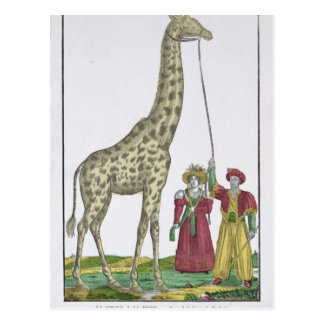 The Giraffe Presented to the King Postcard