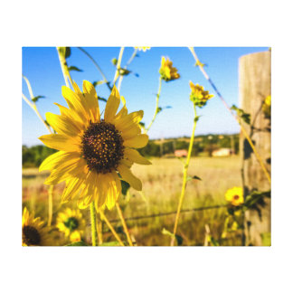 The glowing Sunflower Canvas Print