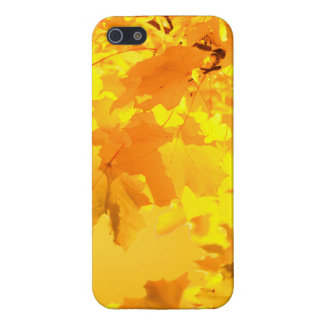The Gold of Autumn iPhone SE/5/5s Case