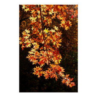 The golden colour of autumn leaves poster