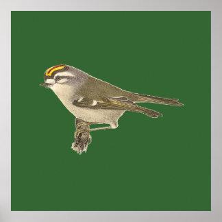 The Golden-crested Kinglet(Regulus satrapa) Poster
