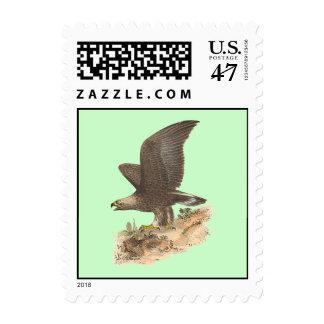 The Golden Eagle(Aquila chrysaetos) Postage