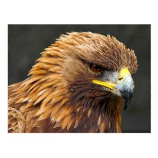 The Golden Eagle Postcard