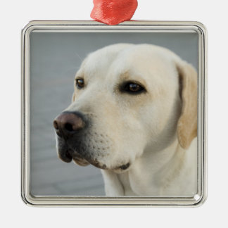 The Golden Labrador Retriever Metal Ornament