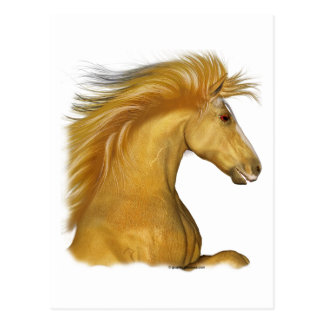 The Golden Palomino Post Card