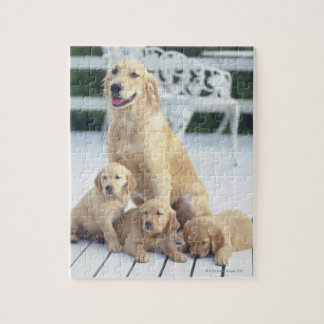 The Golden Retriever is a relatively modern and Jigsaw Puzzle