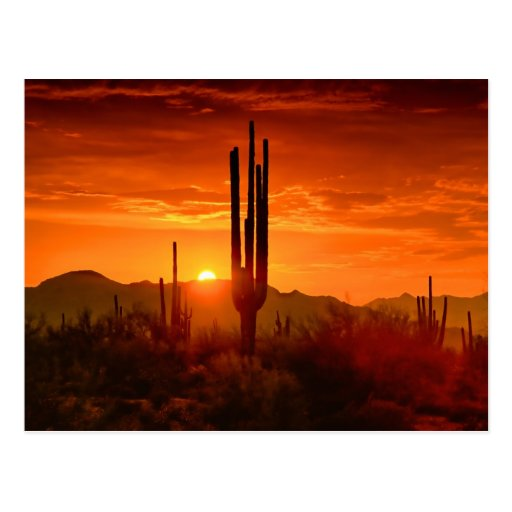 The Golden Southwest Skies Postcards