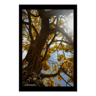 The Golden Tree (Blank) Poster