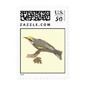 The Golden-winged Warbler	(Vermivora chrysoptera) Postage