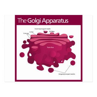 The Golgi apparatus Golgi complex Diagram Postcard