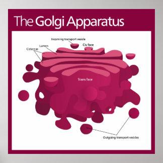 The Golgi apparatus Golgi complex Diagram Poster