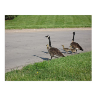 The Goose Family Postcard