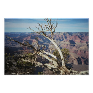 The Grand Canyon, South Rim Poster