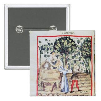 The Grape Harvest, 13th century Pinback Button